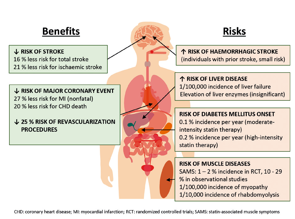 Statin therapy: clinical benefits and potential risks
